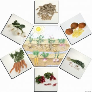 Hogyan készülnek ételeink? (Akros, oktató jellegű párosító játék, 3-7 év)