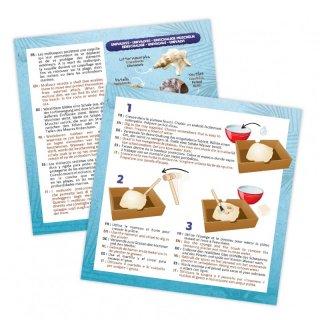 Kagylók felfedező készlet, Buki tudományos kísérletező játék (8-12 év)