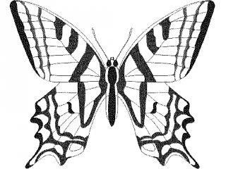 Pillangós nyomtatható színező
