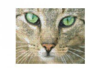 Pixelhobby képkészlet, cica zöld szemmel (804040, 4db alaplap + színek, 7-99 év)