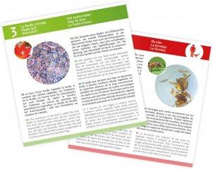 Preparációs szett mikroszkóphoz 20 db kártyával, Buki tudományos játék (8-12 év)