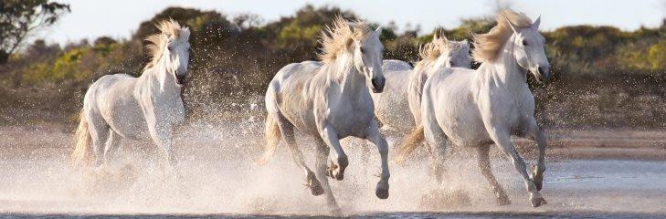 Vágtázó lovak panoráma puzzle, 1000 db-os kirakó (CLEM, 9-99 év)